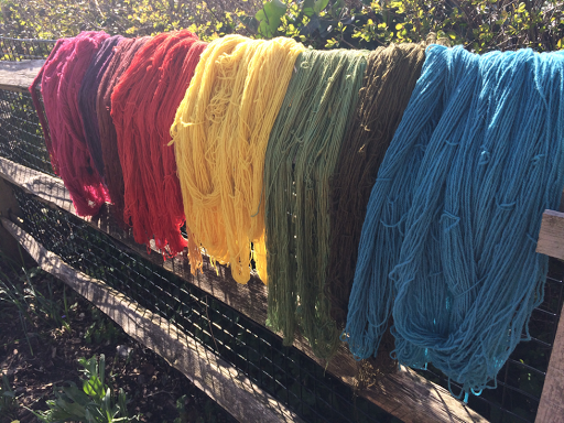 hanks of wool drying in the sun